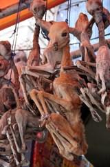 El Mercado de las Brujas - Fetos-de-llama-198x300