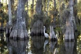 Everglades, el mar de pastos. - Everglades_National_Park-300x200
