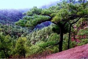 Caldera de Taburiente. (Canarias) - Interior-de-la-caldera-300x202