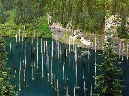 El bosque del lago