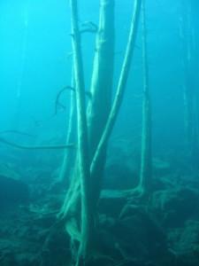 El bosque del lago - Traful-5jpg-225x300