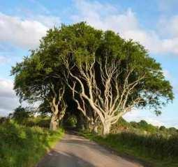 Dark Hedges (Irlanda) - darkHedges-300x282