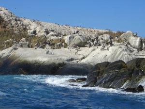 Monumento Natural Isla Cachagua - isla-los-pinguinos-cachagua-1-300x225