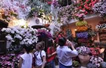 10 patios cordobeses que no te puedes perder - patio_calle_parras_5-300x193