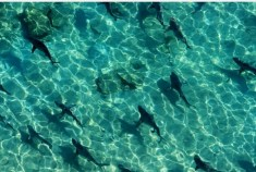 7 playas llenas de tiburones - Playa-Bondi-300x202