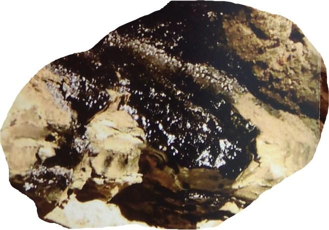 Mina de Petróleo de Riutort - Petróleo supurando de una roca. (3)