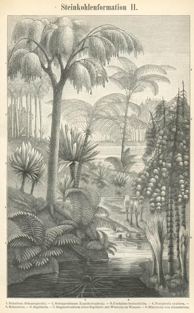 Museo Minas Serchs - Representación de un bosque típico del periodo Carbonífero (5)