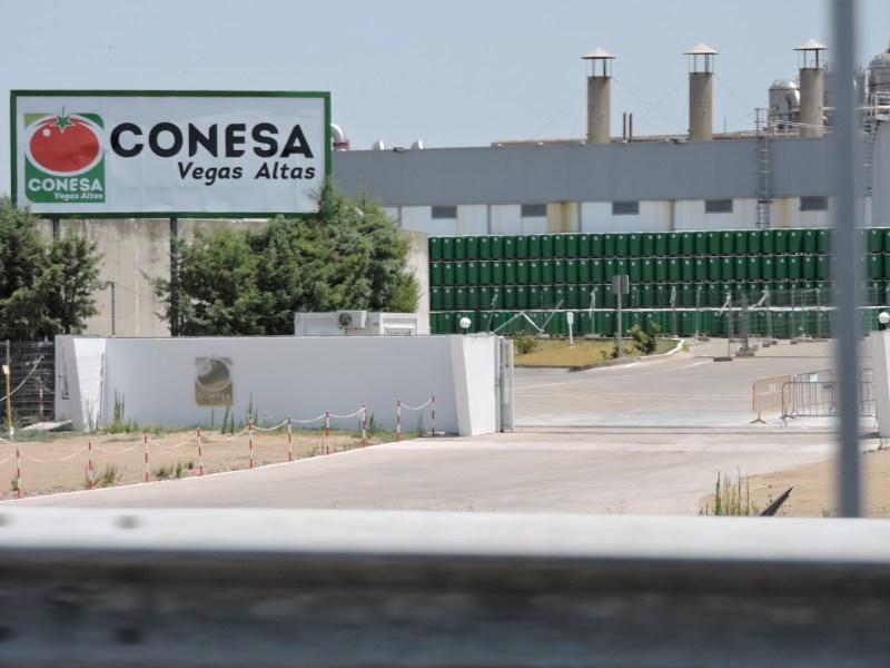 El Tomate - Conesa está especializada en el primer procesado del tomate, que luego se venden a las envasadoras de tomate.