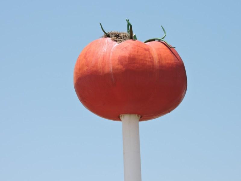 El Tomate - Los restos de sépalos del tomate se pusieron apuntando hacia arriba, para que fuera más llamativo.