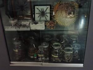 Museo Veterinario Complutense - Colección de animales venenosos.