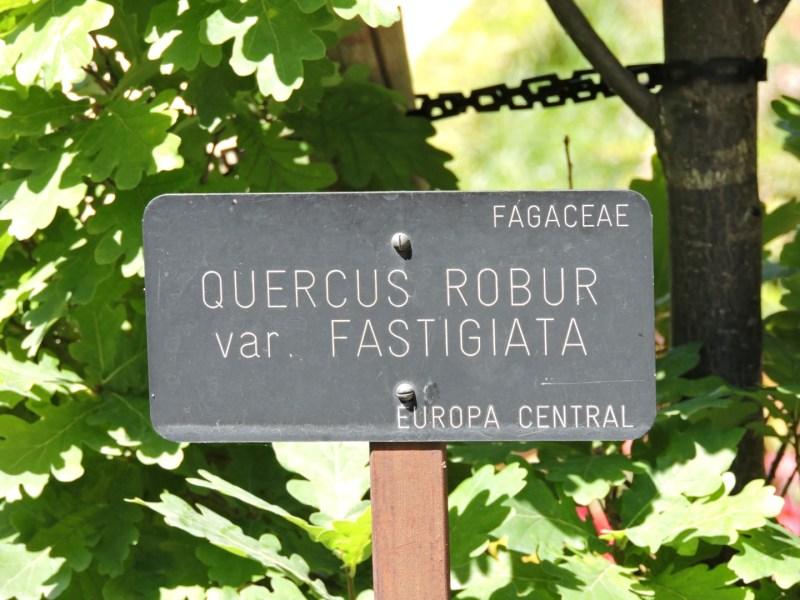 Jardín Botánico Madrid - Todos los árboles y plantas tienen su letrero. En este caso se trata de un roble común.