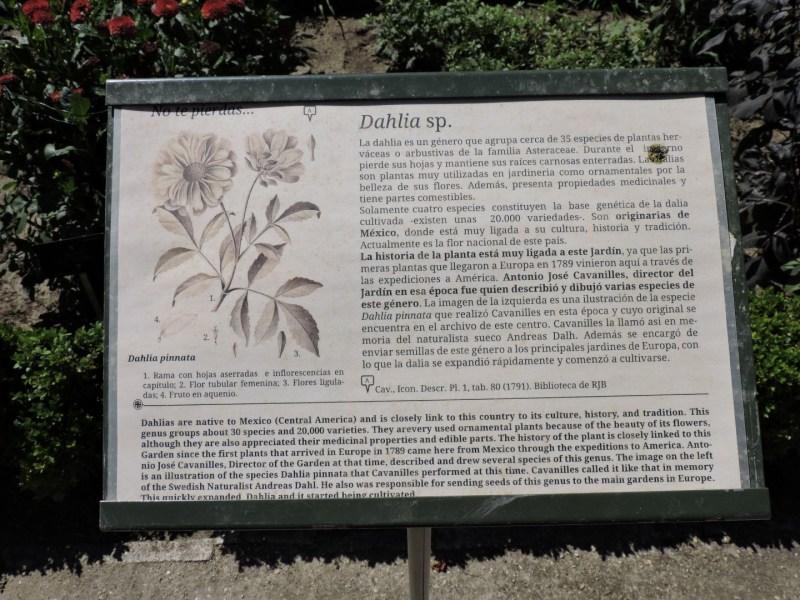 Jardín Botánico Madrid - Cartel de la dalia.