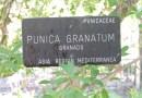 Jardín Botánico Madrid - ¿Púnica? ¿Granados? mmm, ¿de qué me suenan?