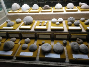 Museo Religioso-Paleontológico - Colección de equinodermos.