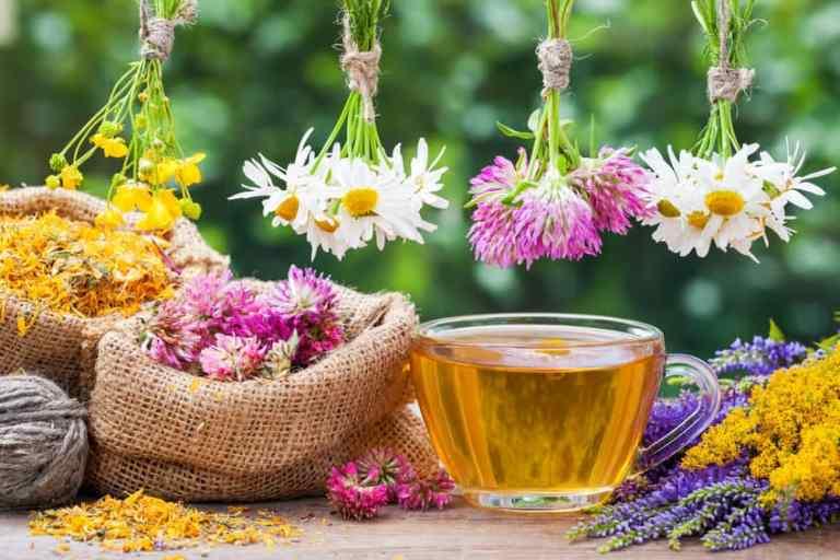 Hierbas curativas y flores