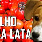 molho_vira_lata_bunker_food