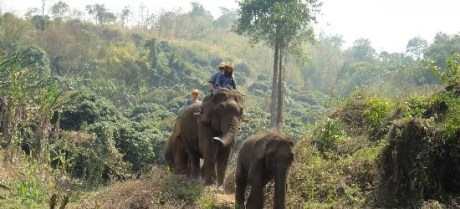 guia en tailandia elefantes español