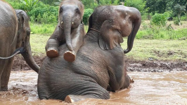 elefantes Chiang mai Chiang rai Tailandia