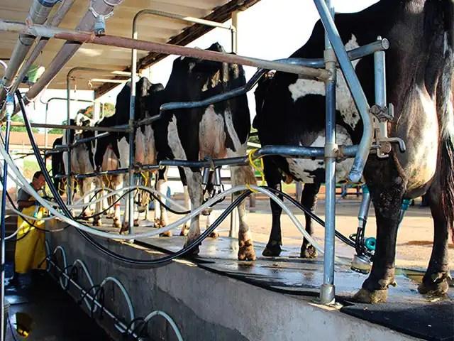 Produtores de leite no mundo todo estão com expectativas positivas para 2021