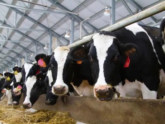 Custo de produção de leite aumentou 24,63% em 2020