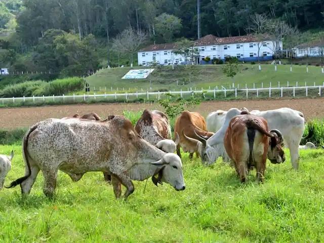 Margem de lucro de produtores de leite diminui