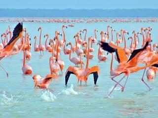Yucatán no México: Uma joia entre o Caribe e o Golfo do México