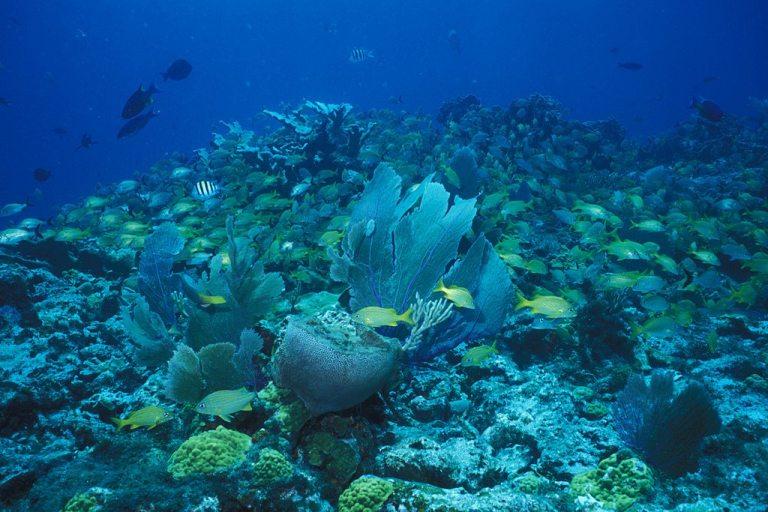 Barreira de corais em Puerto Morelos
