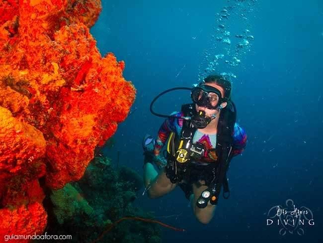 Coral mergulho em Curaçao