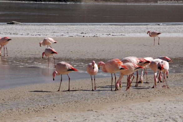 6 bichinhos que vi no caminho para o Uyuni