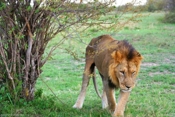 O primeiro safari na África a gente nunca esquece!