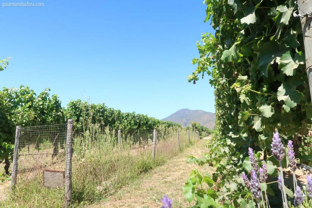 vinícolas Emiliana em Santiago