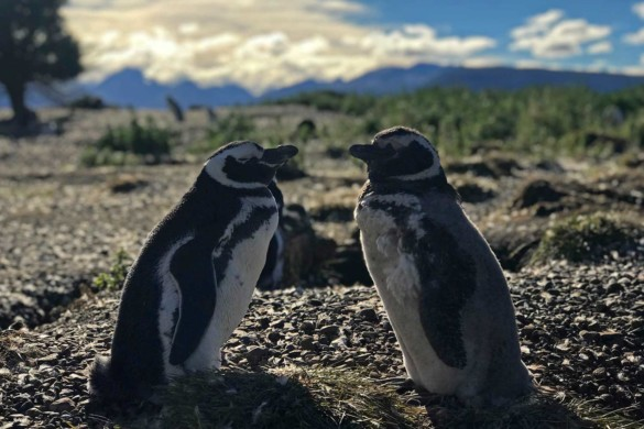 O que fazer em Ushuaia no verão: lista de passeios imperdíveis