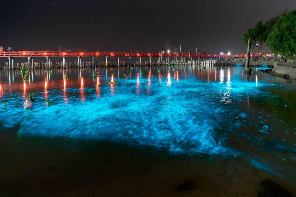 bioluminescencia Porto Rico