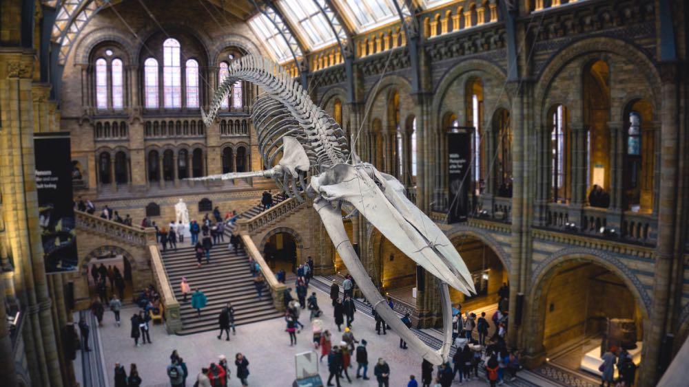 museus gratuitos de Londres - história natural