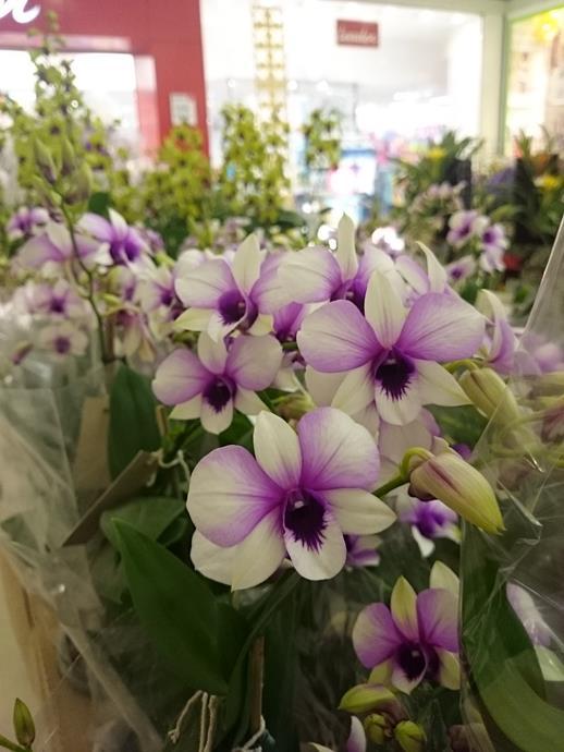 Mostra de Orquídeas