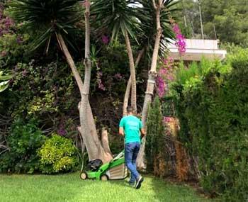 Cercos vivos para jardines
