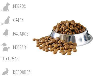 Ventajas buena alimentación mascotas