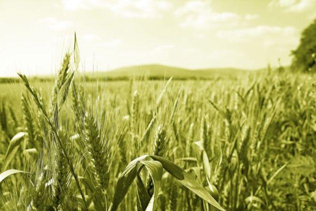 Per ottenere un mutuo agrario bisogna essere aziende agricole o che operano nell'agroindustria e nell'agriturismo