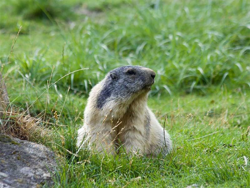 animalierdintrod-parco-bambini-guidabimbi-news-6_20