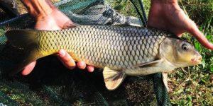 pescare nei laghetti
