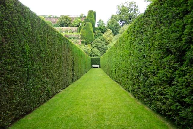 siepi per il giardino: il modo migliore per creare ombra e privacy