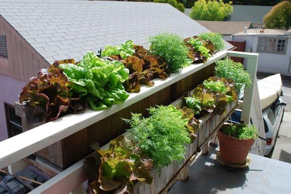 orto urbano sul balcone di casa