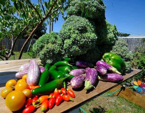 il raccolto dell'orto