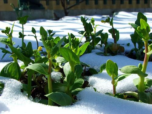 giardinaggio invernale