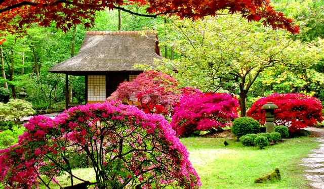 Giardinaggio per principianti i primi dieci punti guida - Guida giardinaggio ...
