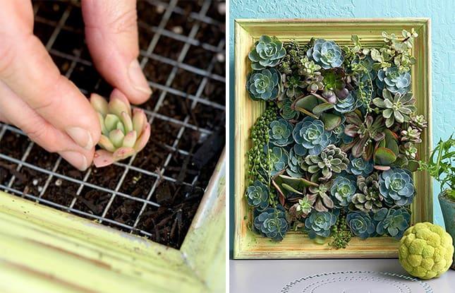 14 idee fai da te per creare bellissimi giardini verticali - Idee per un giardino fai da te ...