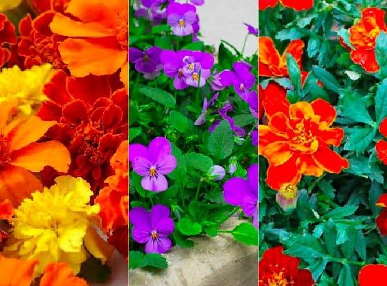 6 bellissimi fiori di primavera