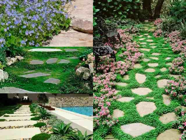 7 bellissime piante perfette per abbellire il vialetto guida giardino - Piante bellissime da giardino ...