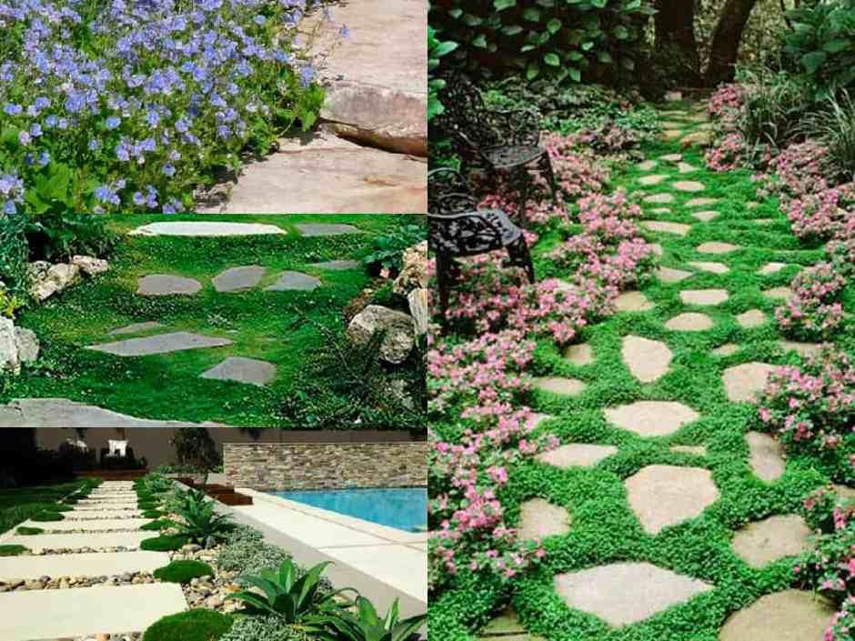 7 bellissime piante perfette per abbellire il vialetto