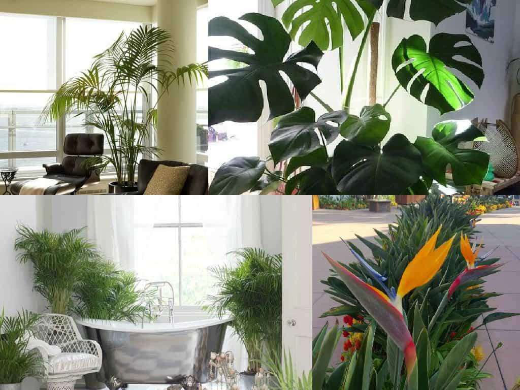 Decorare gli interni con le piante tropicali guida giardino - Piante a cespuglio da giardino ...